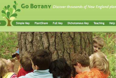 Screenshot of Go Botany homepage